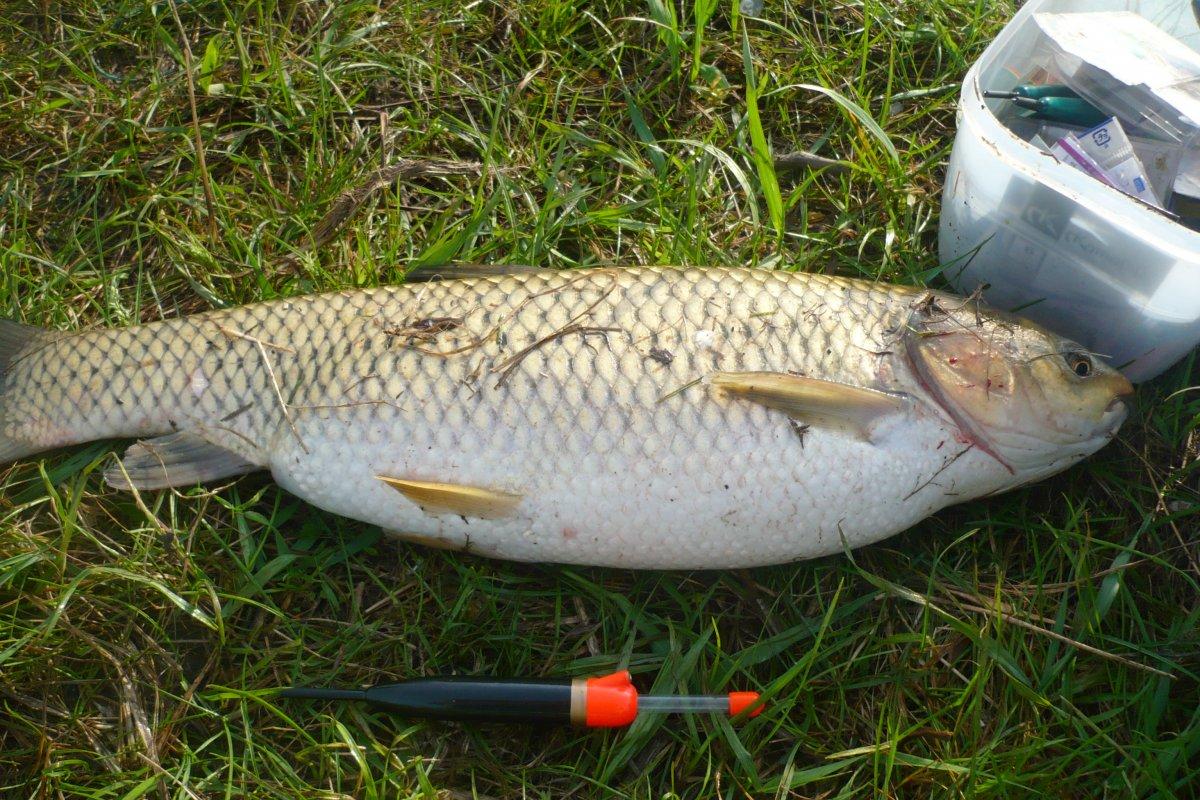 где клюет рыба в луганской области
